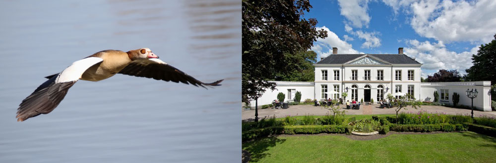 Geese problem resolved thanks to Agrilaser Handheld at nursing home Fleurâge Residences