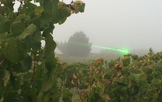 Higher yield, lower costs and better wine as a result of the bird deterrent