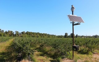 American blueberry grower solves bird problem with innovative laser technology