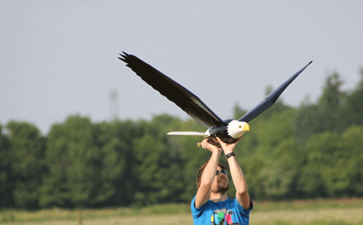 Birdstrike Alliance - Clear Flight Solutinos Robird eagle