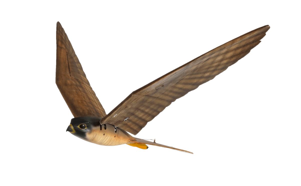 Birdstrike Alliance - Clear Flight Solutions Robird