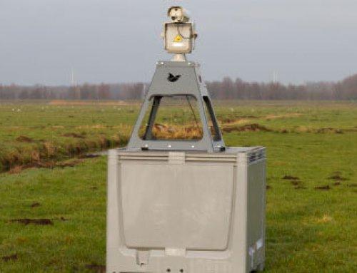Ganzen verjagen met laser licht zonder verstoring van de weidevogels