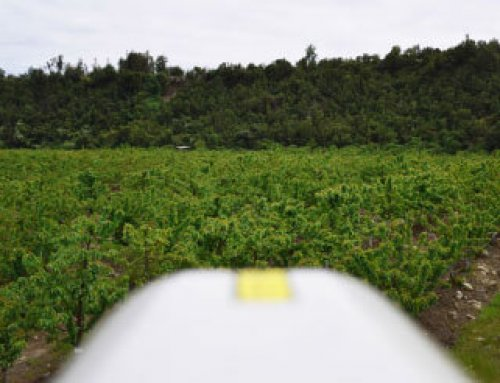 Agricola EU uses Automatic bird deterrent to avoid cherry crop loss
