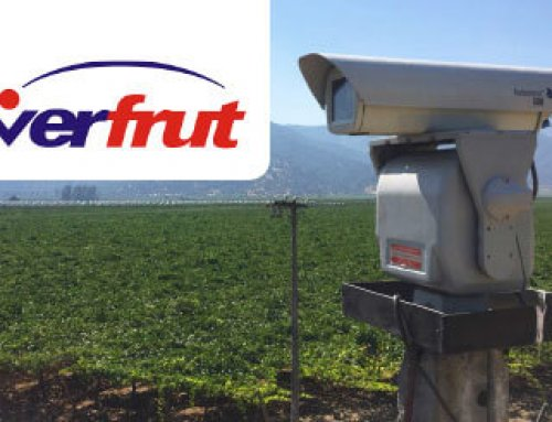 The grape damage by birds was drastically reduced at Verfrut Fruit Company