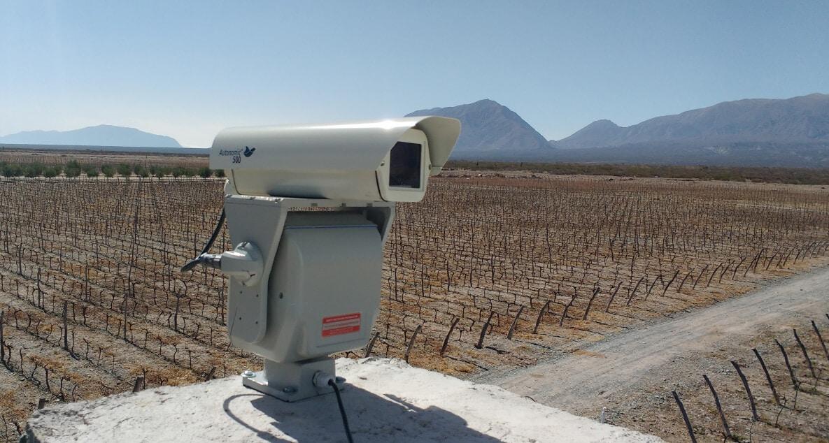 Disuasión láser que protege las uvas de vino del daño de las aves