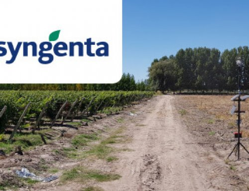 A sunflower seed producer of Syngenta achieved bird damage reduction
