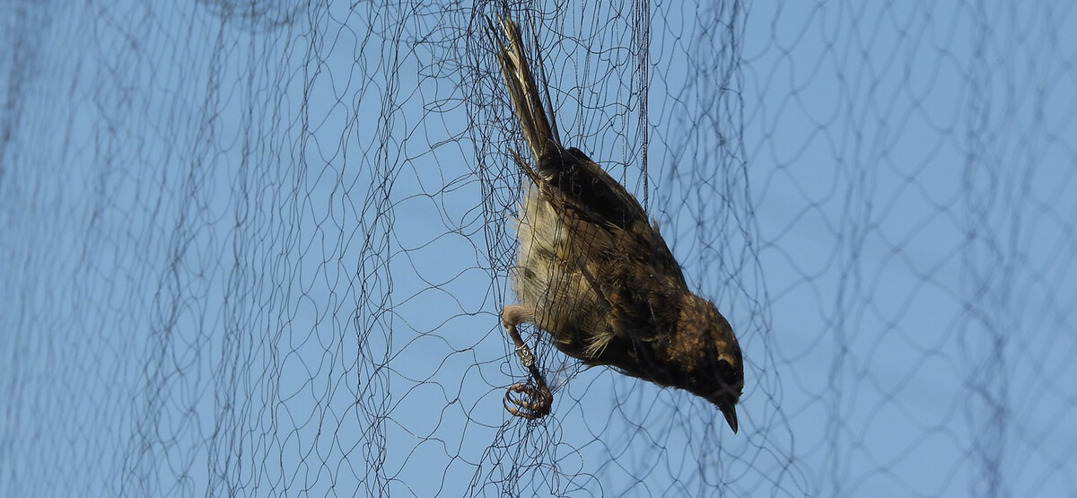 The Horrible Truth About Bird Netting
