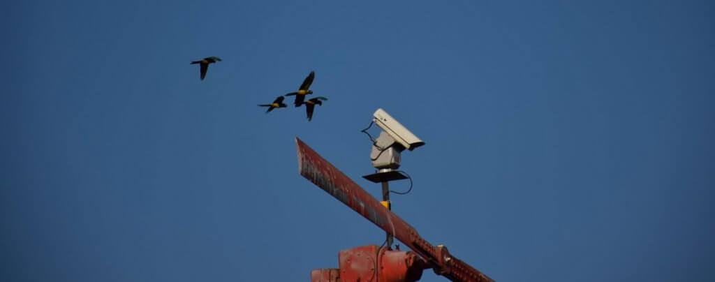 Innovative Technology Solving Bird Problems for Fruit Industries
