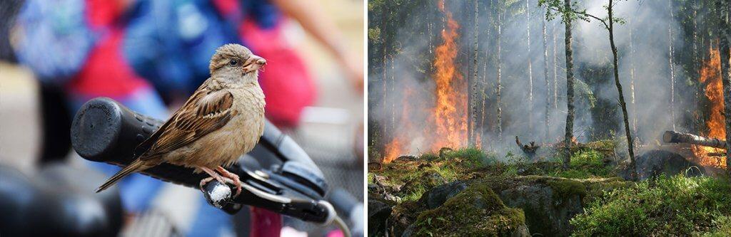 How do we take care of Endangered Birds?