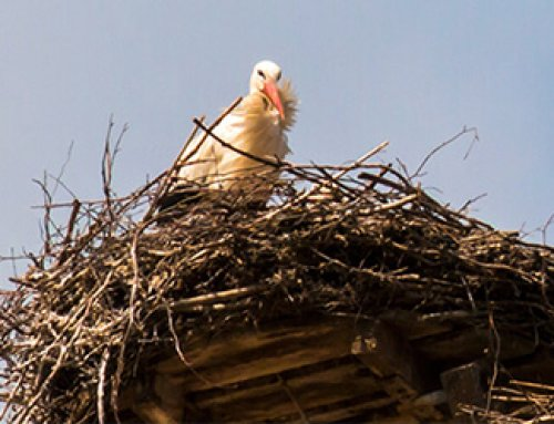 How to prepare for bird nesting season at your Facility/Warehouse?
